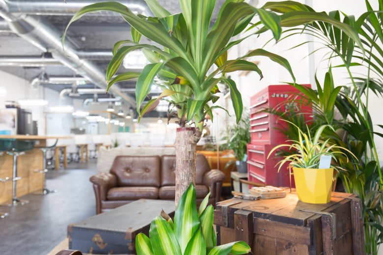 Plants-areaworks-coworking-space-manor-house-coworking-office-london